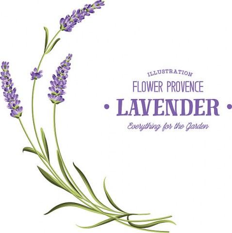 Aroma - Diffuser Oil Lavender